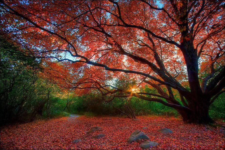 Barwy jesieni #2 10