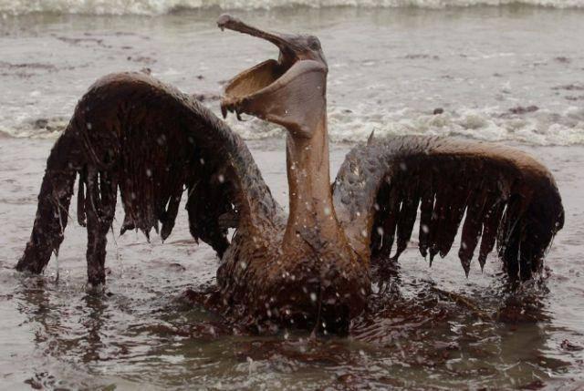 Pierwsze ofiary wycieku ropy 20