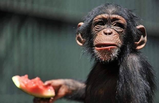 Śmieszne zdjęcia zwierząt #4 24