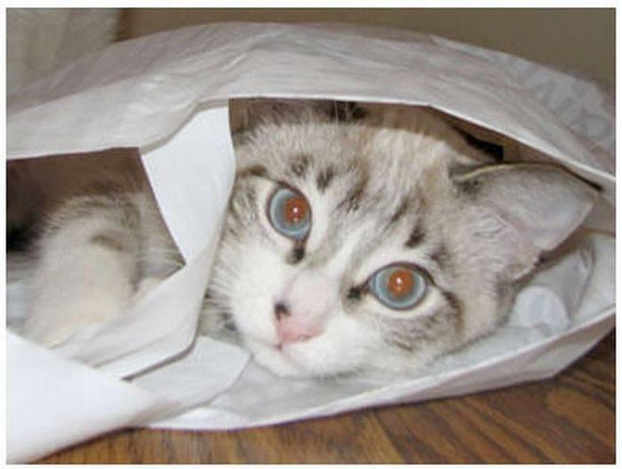 Przyczajone koty 9