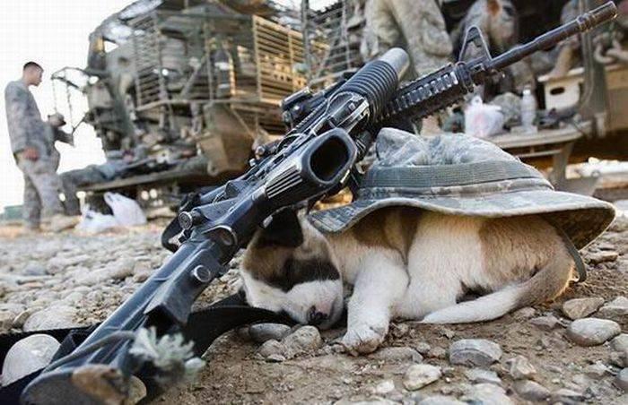 Wojsko z przymrużeniem oka #2 7
