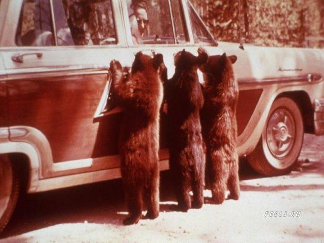 Niedźwiedzie 74