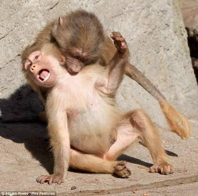 Śmieszne zdjęcia zwierząt #7 21