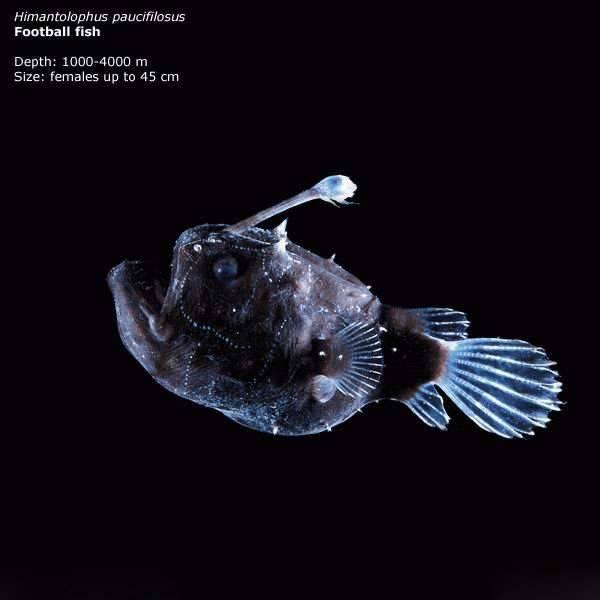 Zwierzęta z głębin 3