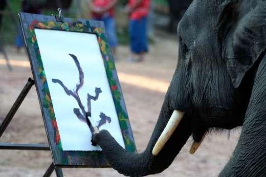 Słoń malarz 2