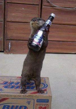Zwierzaki i alkohol 24