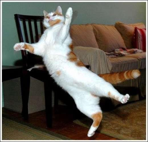 Kocie skoki 5