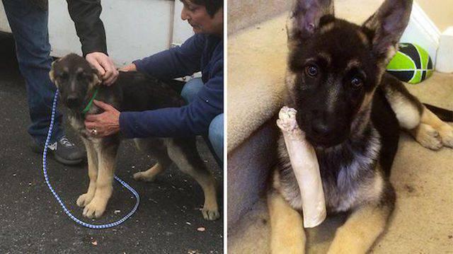 Przed i po adopcji 10
