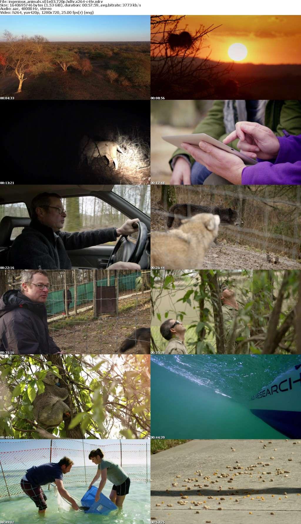 Ingenious Animals S01E03 720p HDTV x264-C4TV