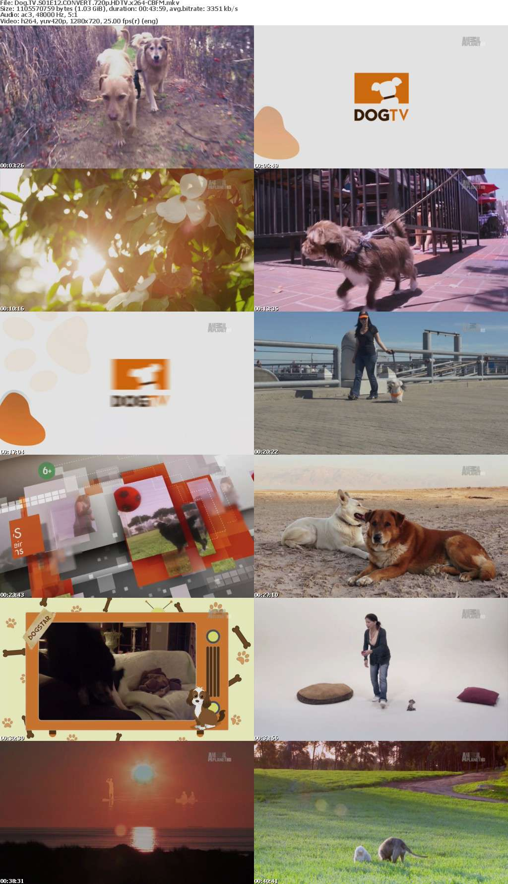 Dog TV S01E12 CONVERT 720p HDTV x264-CBFM