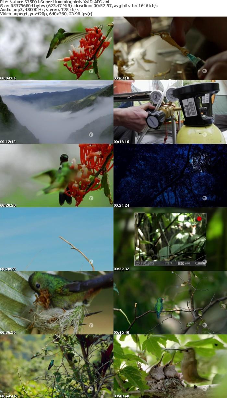 Nature S35E01 Super Hummingbirds XviD-AFG