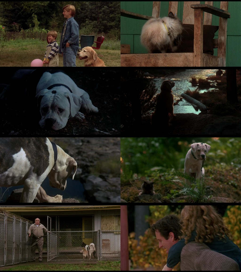 analysis if homeward bound Detailed plot synopsis reviews of homeward bound: the incredible journey chance, shadow  script analysis of homeward bound: the incredible journey.