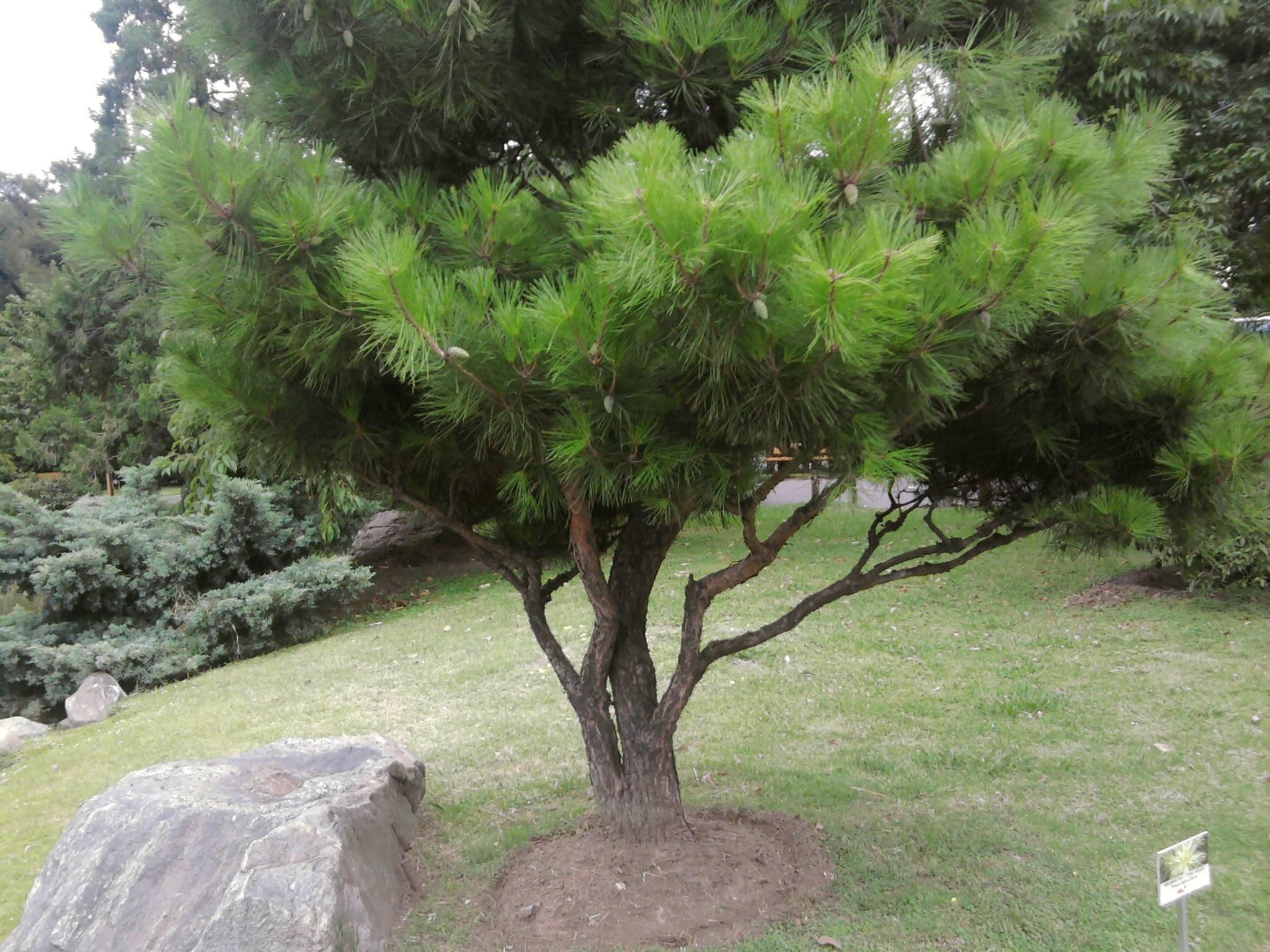 Mi paseo por el jard n japones taringa Jardin japones informacion
