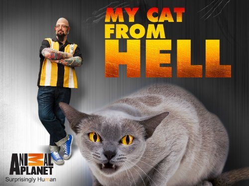 My Cat From Hell S10E11 Sister Smackdown 720p WEB x264-CAFFEiNE