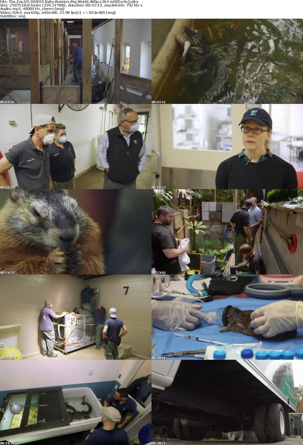 The Zoo US S03E05 Baby Bunnies Big World 480p x264-mSD