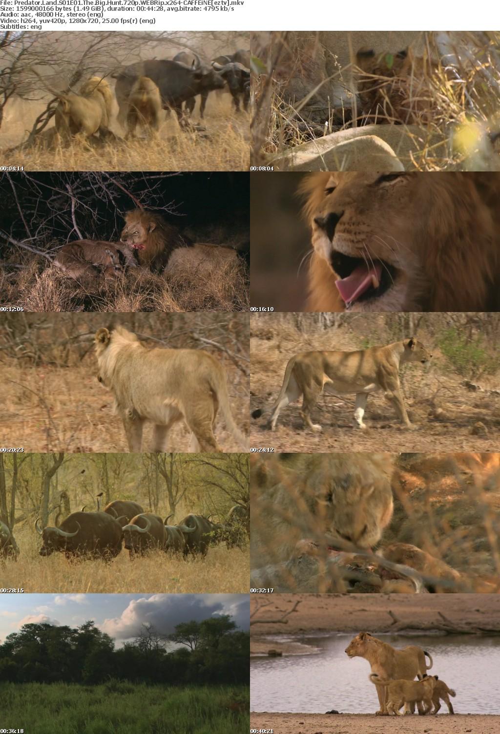 Predator Land S01E01 The Big Hunt 720p WEBRip x264-CAFFEiNE