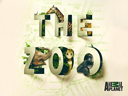 The Zoo US S04E03 Tigers Day at the Dentist HDTV x264-CRiMSON