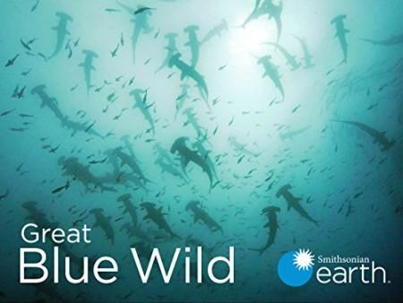 Great Blue Wild S01E03 Roatan 480p x264-mSD